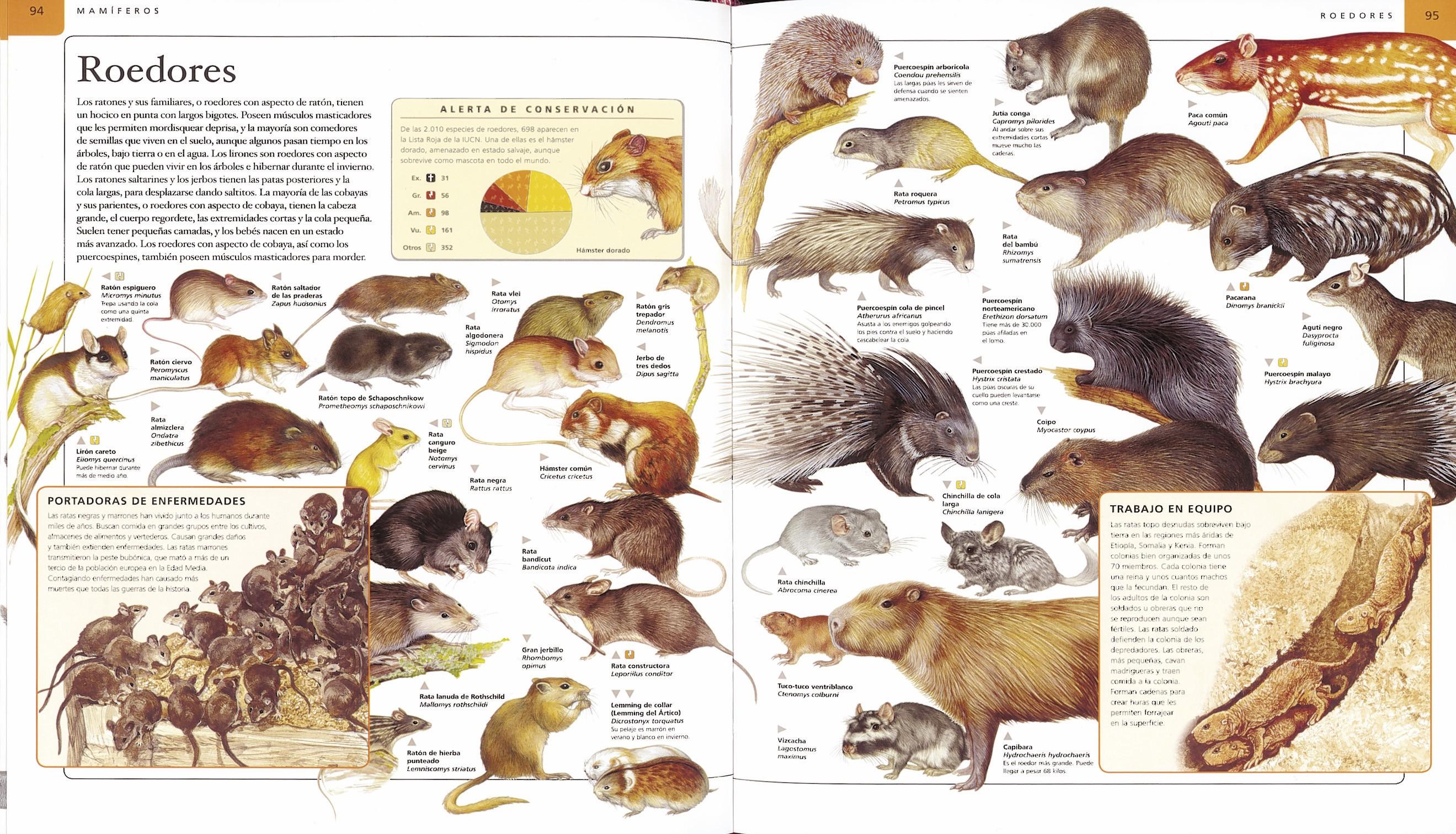 Enciclopedia de los animales | Editorial Susaeta - Venta