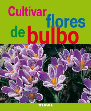 Cultivar flores de bulbo