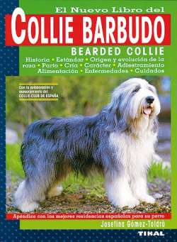 Collie barbudo