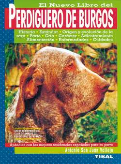 Perdiguero de Burgos
